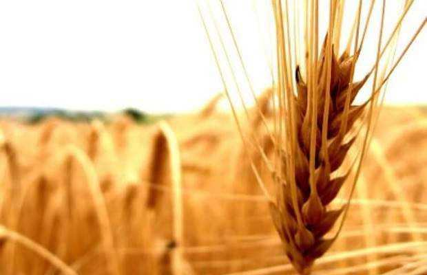 tarım kredisi nasıl alınır