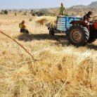 ÇKS Sorgulama ve Çiftçi Kredisi Belgeleri
